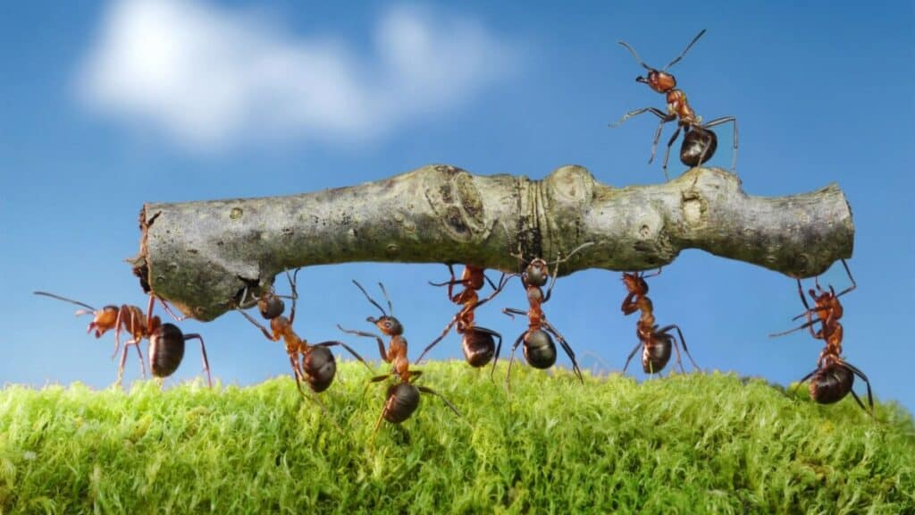 Ants On a Boat: Is It Possible To Get Rid Of Them Permanently?